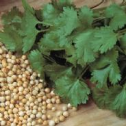 Coriander Cilantro 100 grams ( Bulk Discounts available )